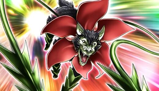 《花牙狼のクロバナ》の使い方や相性の良いカードを徹底考察【遊戯王ラッシュデュエル】